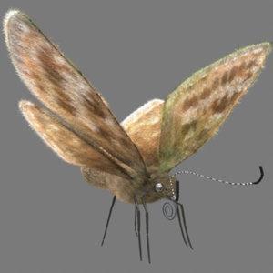 butterfly fur dingy skipper 3d model