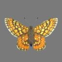 Gulf Fritillary Butterfly 3D models