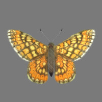 3d butterfly fur marsh model