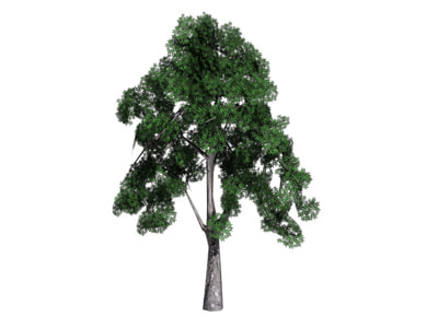 3d model tree realtime bransches