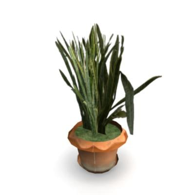 shrub ma