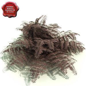 3d athyrium niponicum burgundy lace model