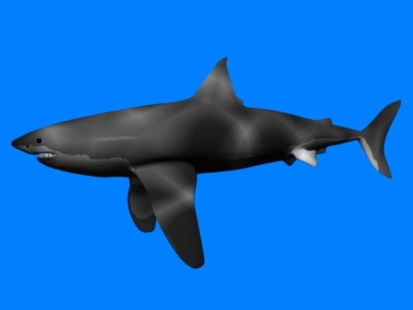 3d model of great white shark