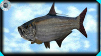 tarpon fish 3d 3ds