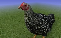 Black Chicken 3D Model.