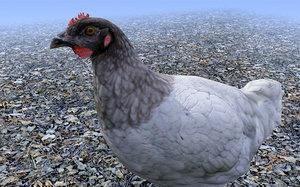 black head chicken 3d model