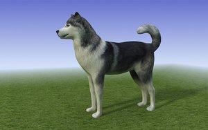 black white husky dog 3d 3ds