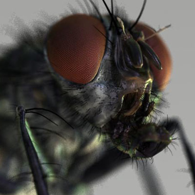 3d model housefly 7