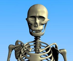 human skeleton 3d 3ds