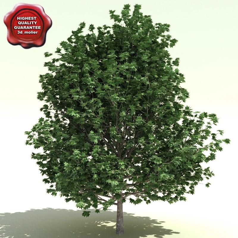 acer saccharum bonfire 3d model