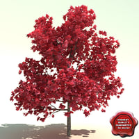acer rubrum red sunset 3d model