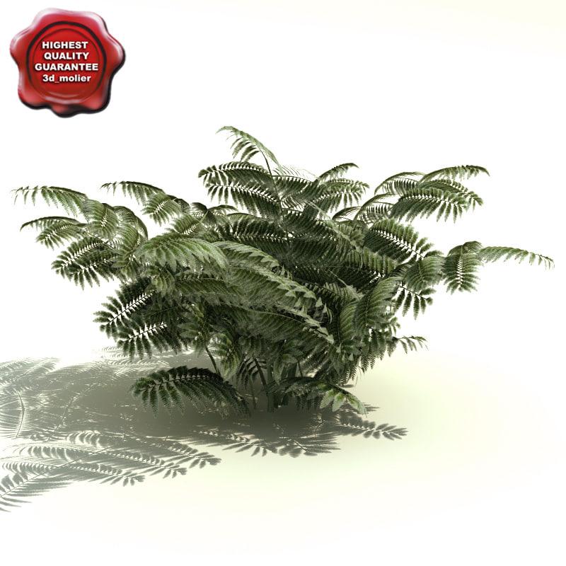 3dsmax athyrium niponicum pictum fern
