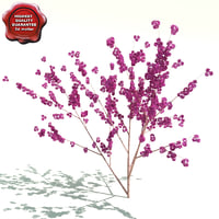 cercis canadensis flame 3d max