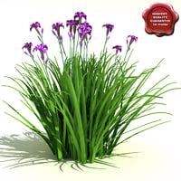 iris ensata japanese 3d max