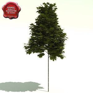 3dsmax platanus x acerifolia bloodgood