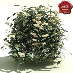 3d viburnum rhytidophyllum cree model