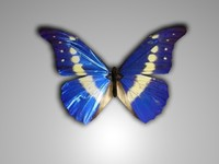 butterfly.rar