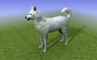 white husky dog 3ds