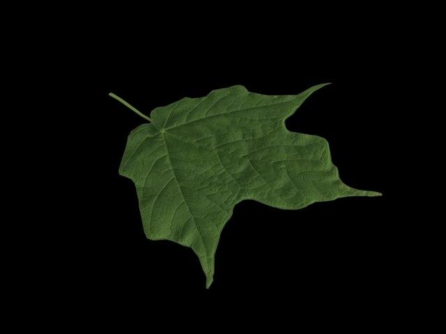 leaf max free
