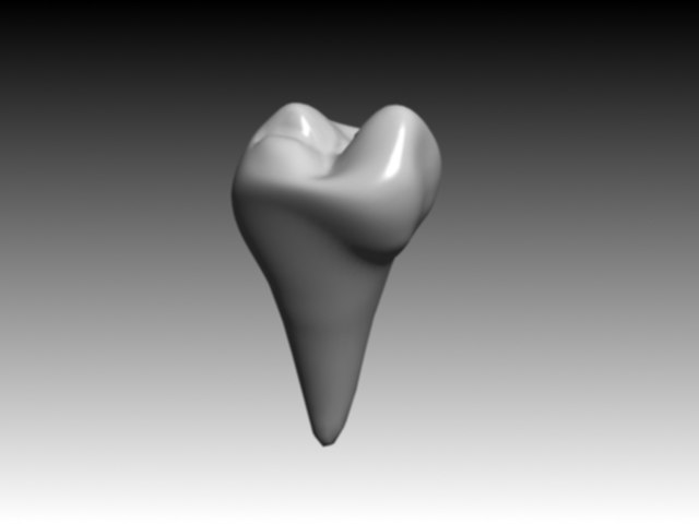 3d model of second premolar mandibular