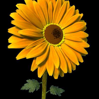 gerbera daisy 3d model