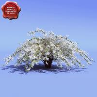 deutzia gracilis 3d model