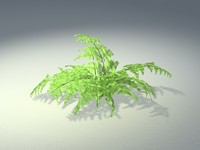 high-poly fern plant 3d model