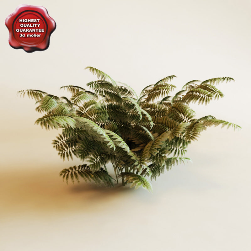 3d model ferns modelled