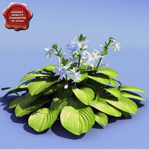 3d hosta plantaginea aphrodite