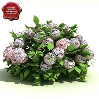 hydrangea arborescens annabelle 3d model