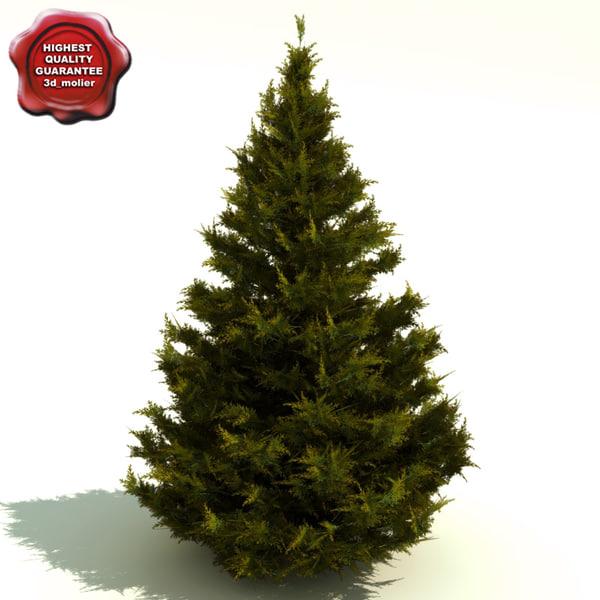 3d juniperus chinensis hetzii glauca