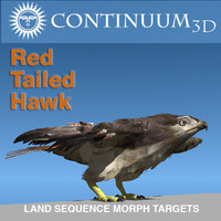 Red Tailed Hawk - Landing Morph sequence