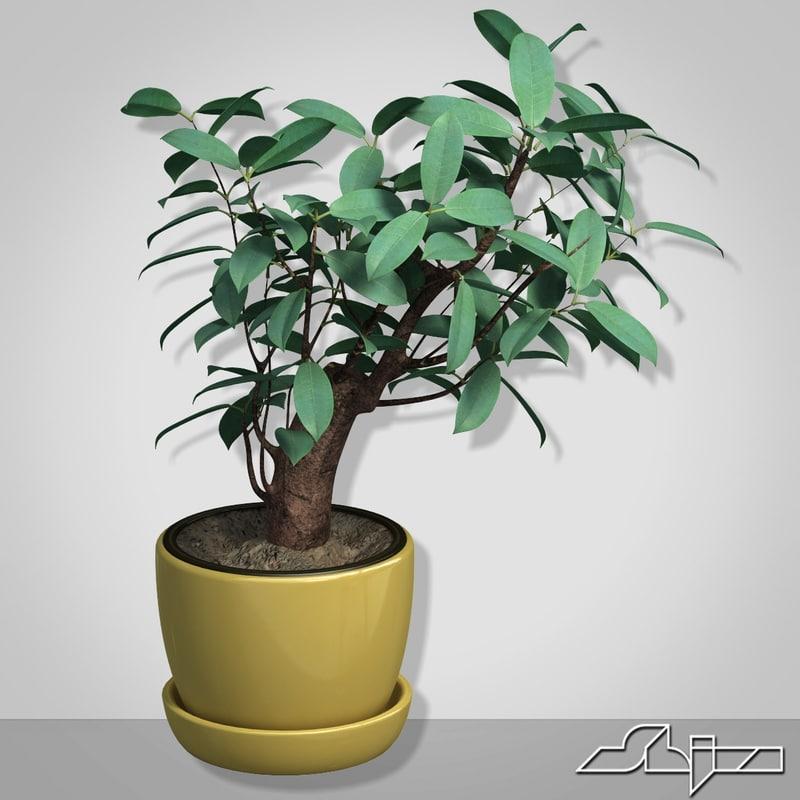 3d model vase bush