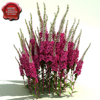 lightwave veronica spicata red fox
