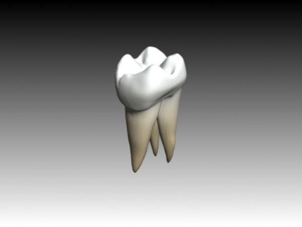 molar maxilar 3d model