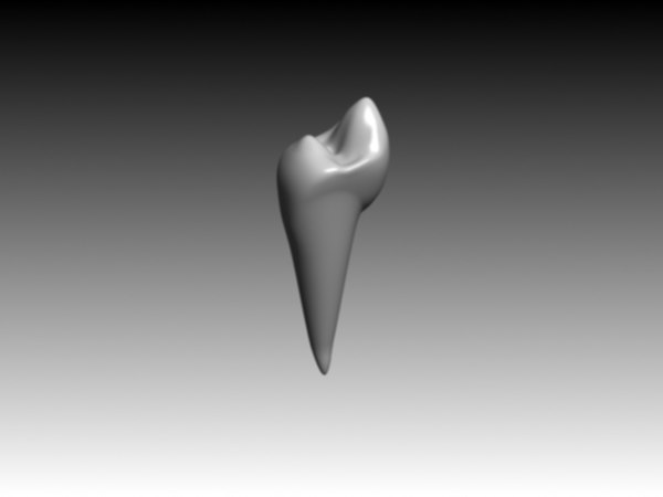 premolar mandibular 3d model