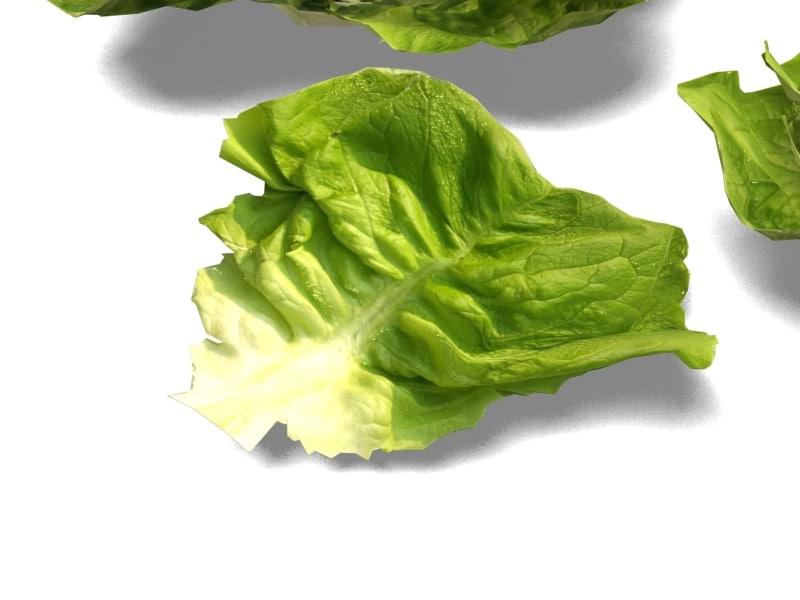 lettuce 3ds