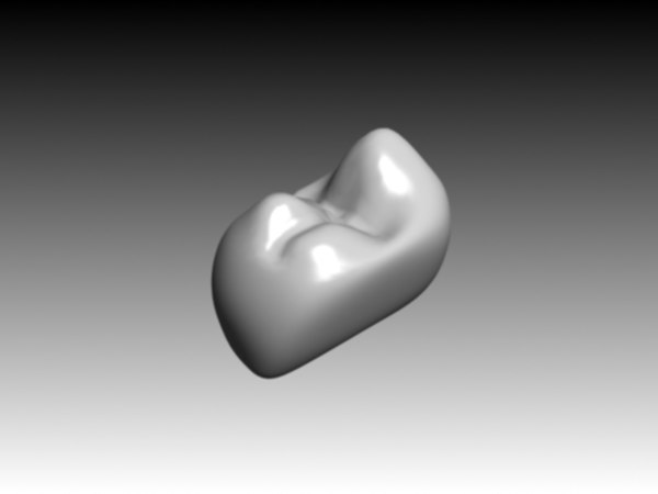 second premolar mandibular 3d model