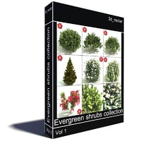 Evergreen shrubs collection