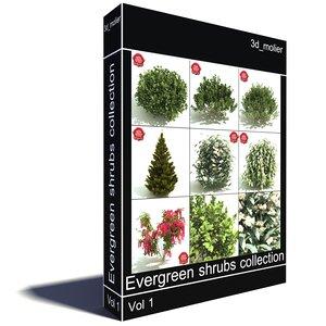 3d evergreen shrubs model