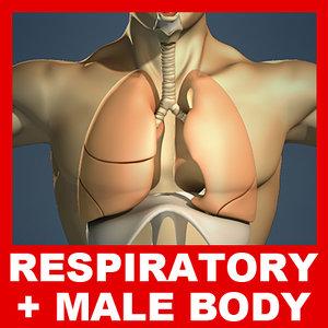 3d model human respiratory male body