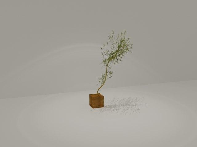 bamboo mosso max