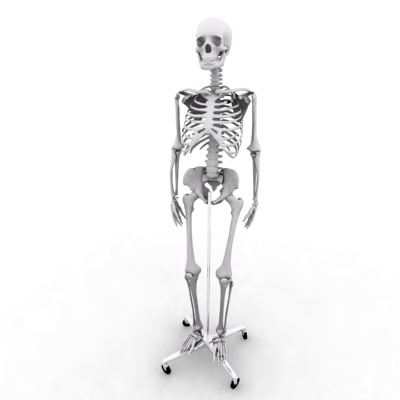 3d model skeleton medical