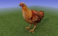 Brown Chicken_3D Model