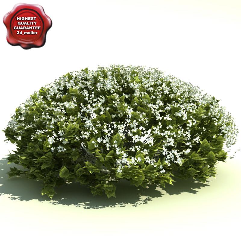 deutzia gracilis nikko 3d model