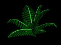 free fern plant 3d model