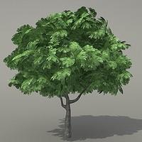 ma tree