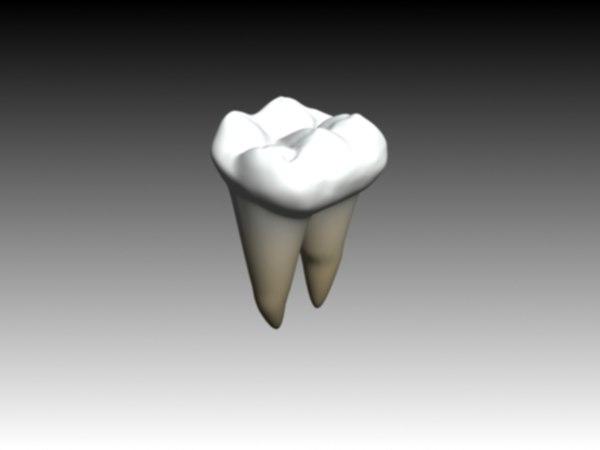 molar mandibular 3d max