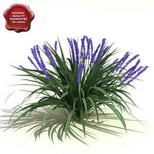 3ds liriope muscari lilyturf