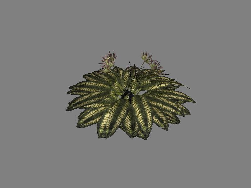 3d tropical plant